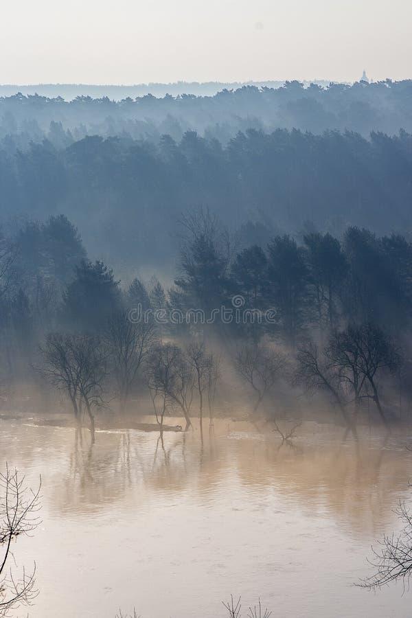 Туманный ландшафт леса рекой стоковое фото rf