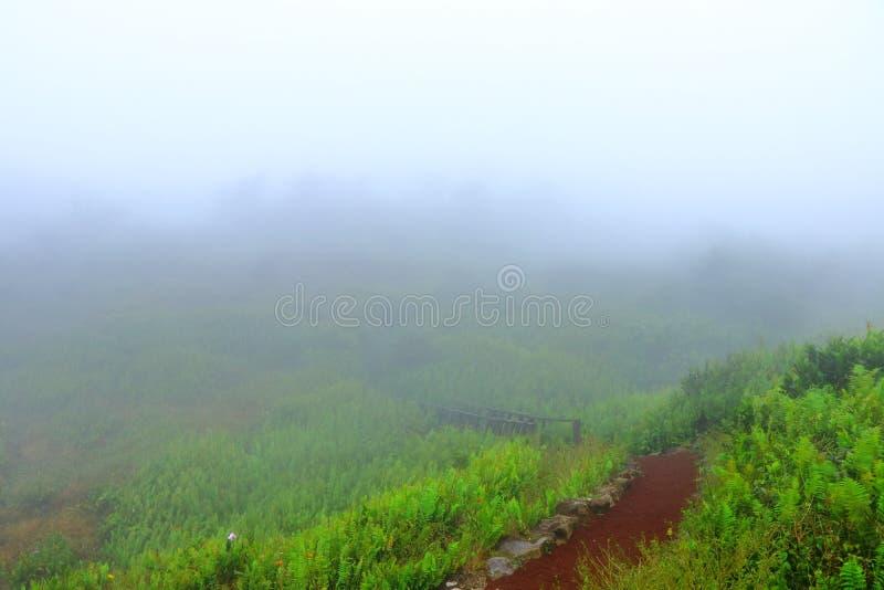 Туманный ландшафт на верхней части вулкана Mombacho, Гранады, Никарагуа стоковые изображения rf
