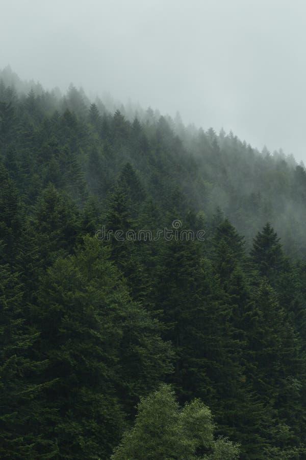 Туманный ландшафт с туманным пейзажем горы тайны леса стоковые фотографии rf