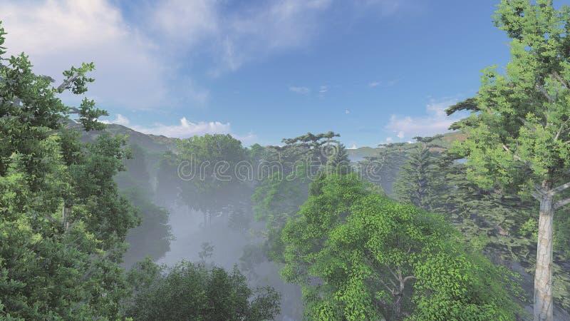 Туманный лес в дневном времени стоковые изображения rf