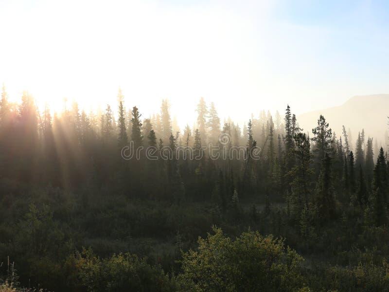 Туманный лес тундры стоковые изображения