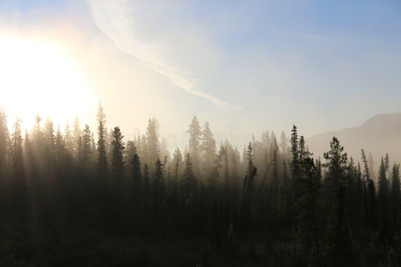 Туманный лес тундры стоковая фотография