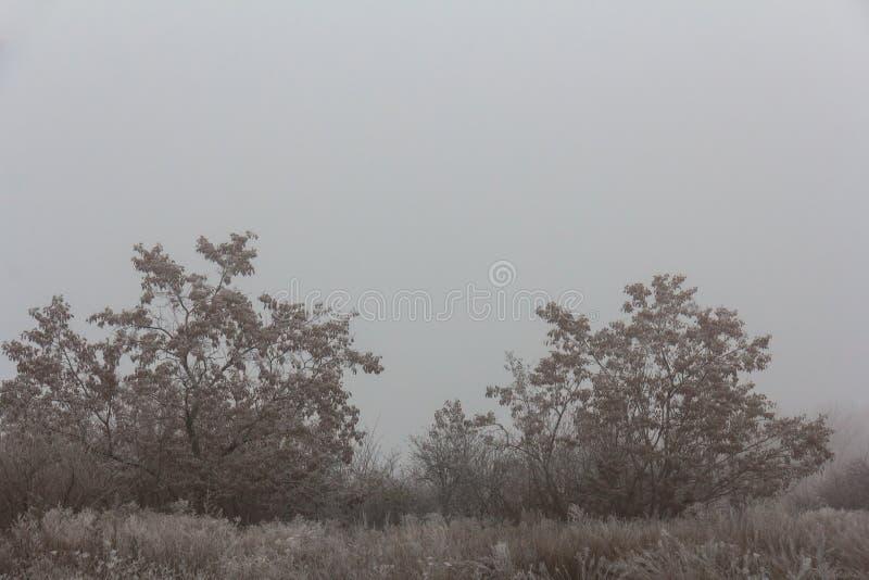 Туманный морозный ландшафт Деревья и кустарники предусматриванные с заморозком стоковые фото