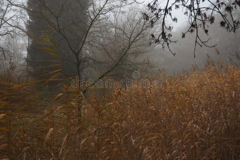 Туманный парк в последнем падении или предыдущей зиме стоковая фотография rf