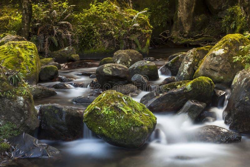 Туманный поток леса горы воды стоковая фотография rf