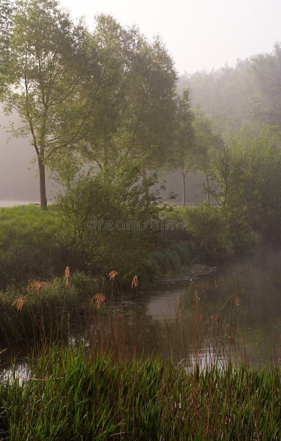 туманный пруд стоковые фото