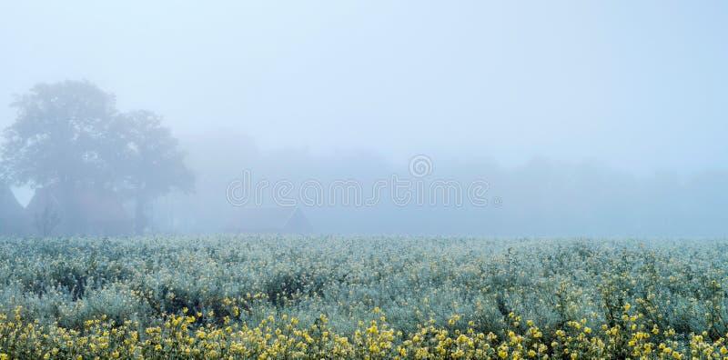 Туманный сельский ландшафт с желтым цветом цветет некоторые деревья и ферма стоковая фотография rf
