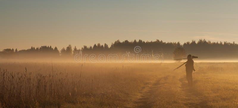 Туман восхода солнца Bialowieza фотографа живой природы стоковая фотография