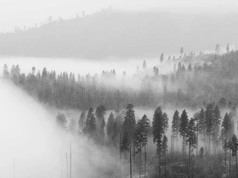 Туман в долине Yosemite стоковое фото rf