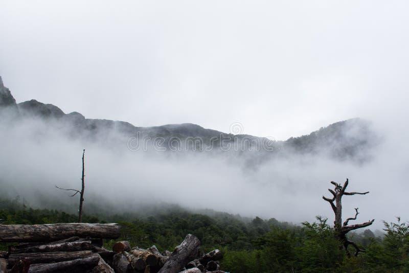 Туман в древесинах стоковое изображение