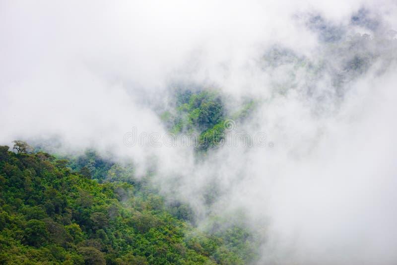 Туман горы сценарный на thongphaphum стоковое фото rf