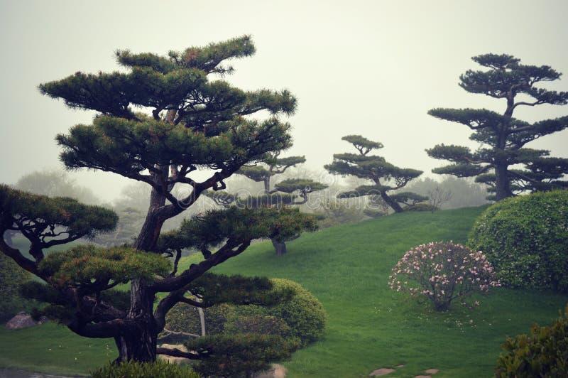 Туман деревьев бонзаев стоковая фотография