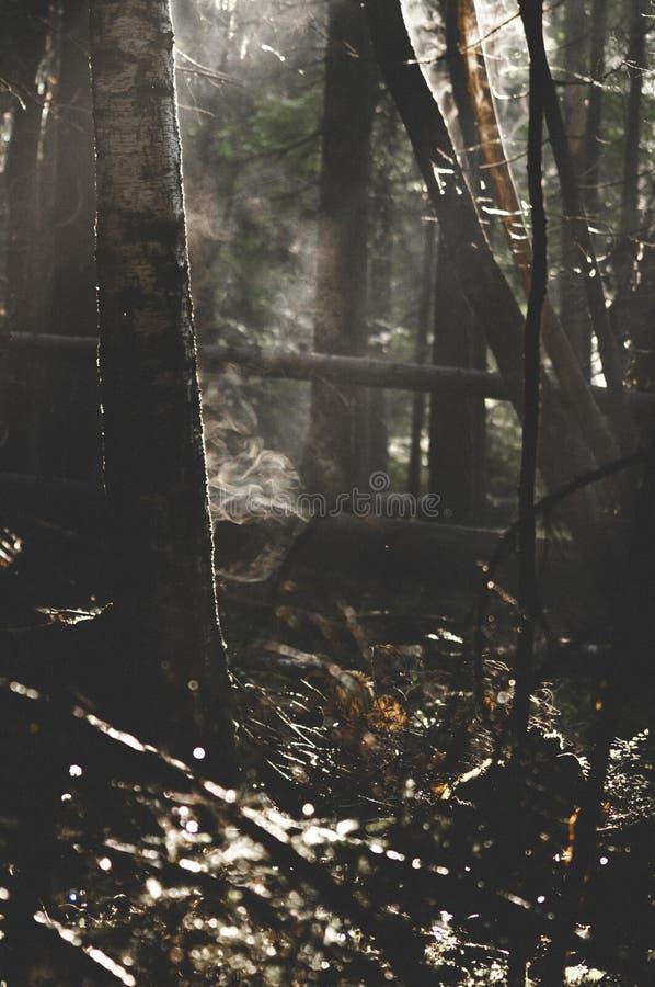 Туман и поток от древесины стоковые фотографии rf