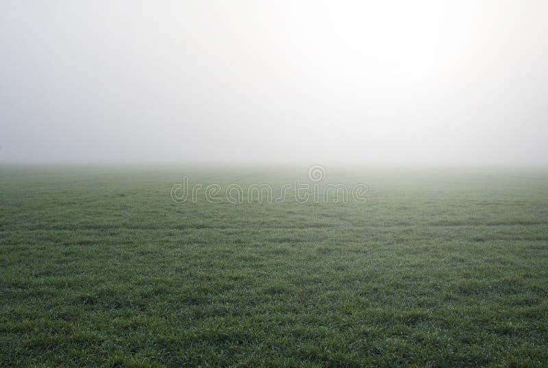 Туман и роса в поле рано утром в падении стоковое изображение rf