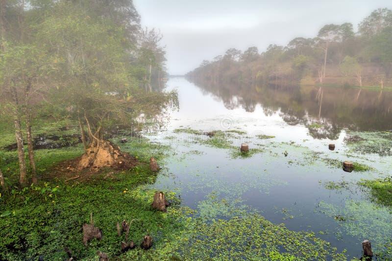 Туман канала Angkor Wat, Камбоджи стоковое изображение rf