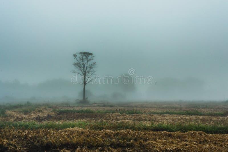 Туман ландшафтов в нерезкости прогулки утра стоковые изображения