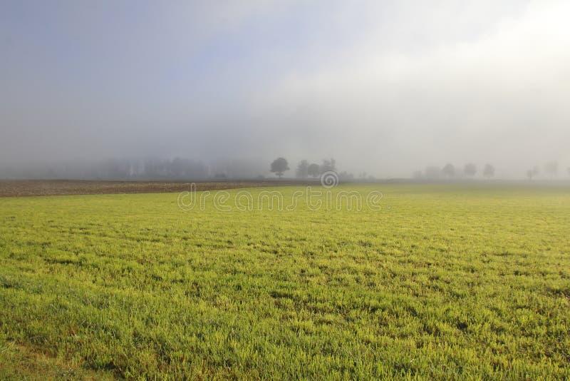Туман над аграрным краем стоковые фотографии rf