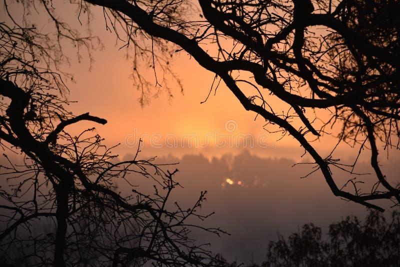 Туман на озере Winnsboro в восточном Техасе стоковое изображение