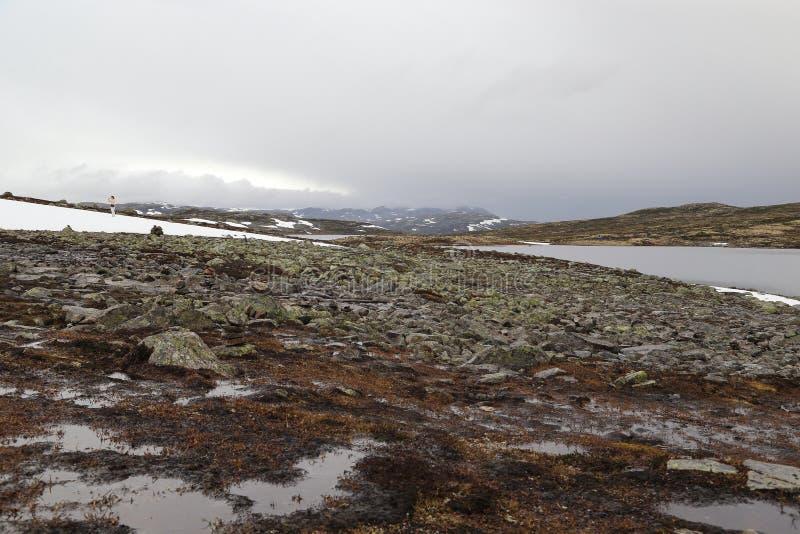 Туман над тундрой стоковое изображение rf