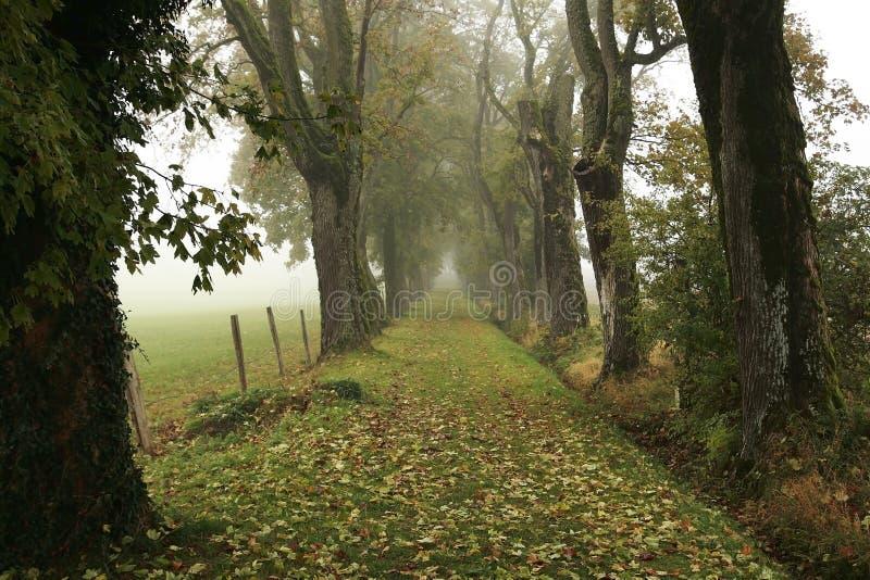 туман переулка стоковая фотография rf
