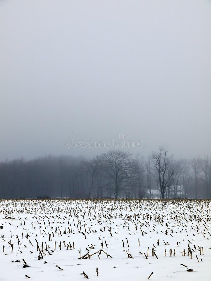 туман поля фермы мозоли снежный стоковая фотография