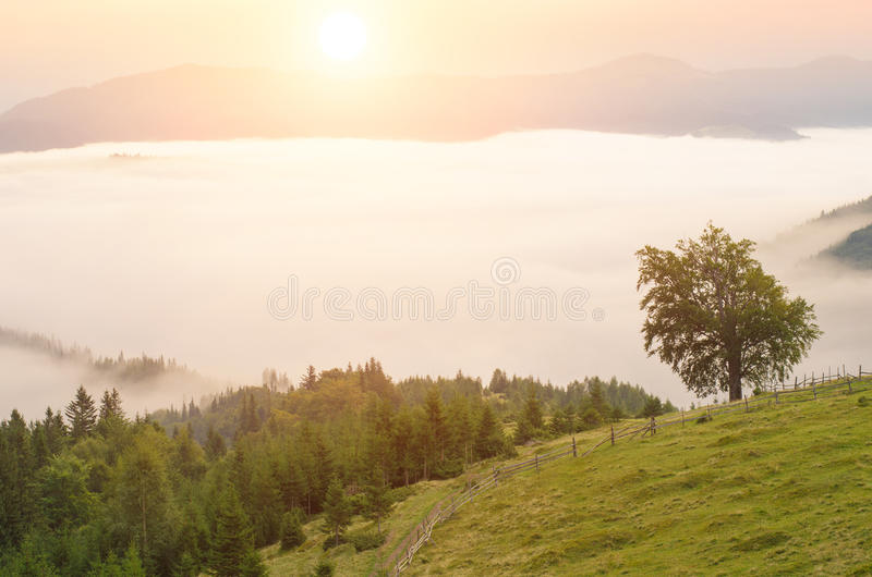 Туман утра в горах ландшафт лета с лесом ели на наклонах горы тонизировать цвета Низкий контраст стоковые изображения rf