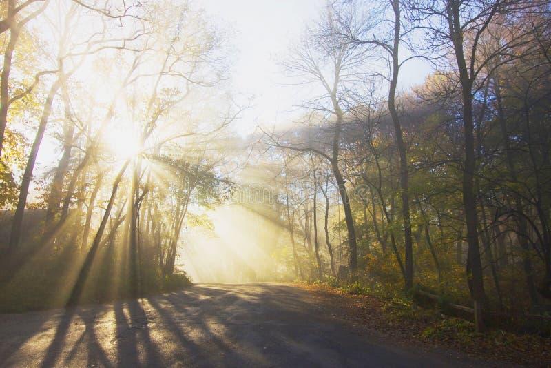 Туман утра в лесе стоковые фотографии rf