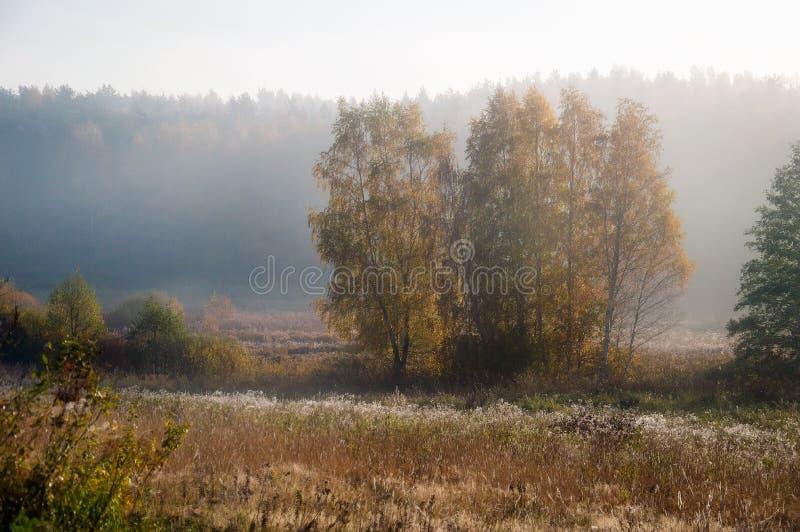 Туман утра в сентябре E Поле и лес стоковое изображение rf