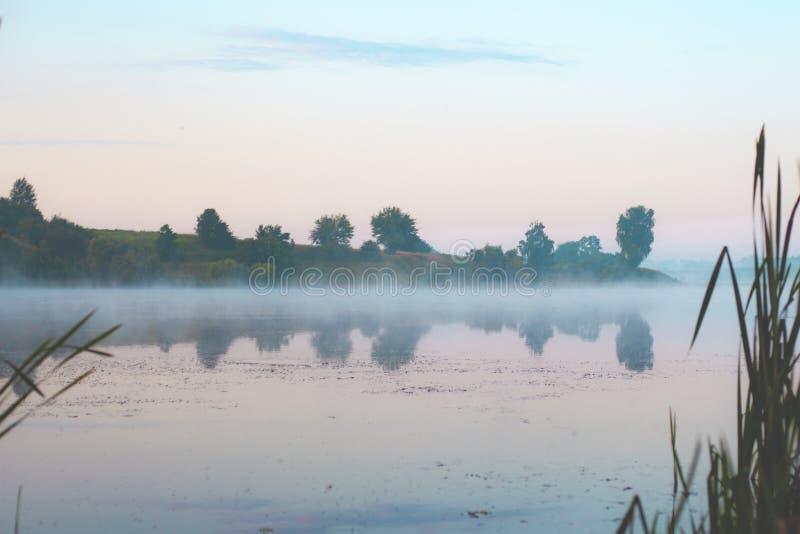 Туман утра в тростниках озером стоковые фотографии rf