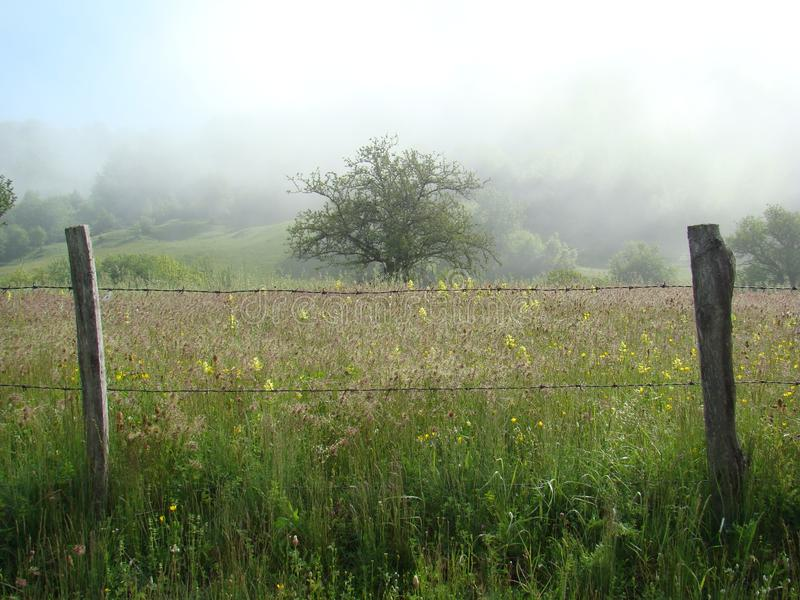 Туман утра горы стоковое фото