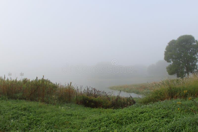 Туман утра лета над полем стоковое фото