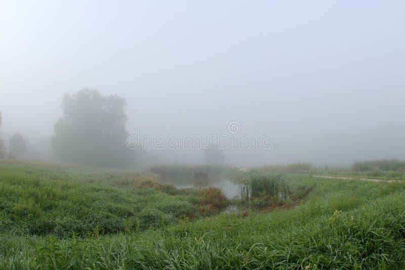 Туман утра лета над полем стоковые фото