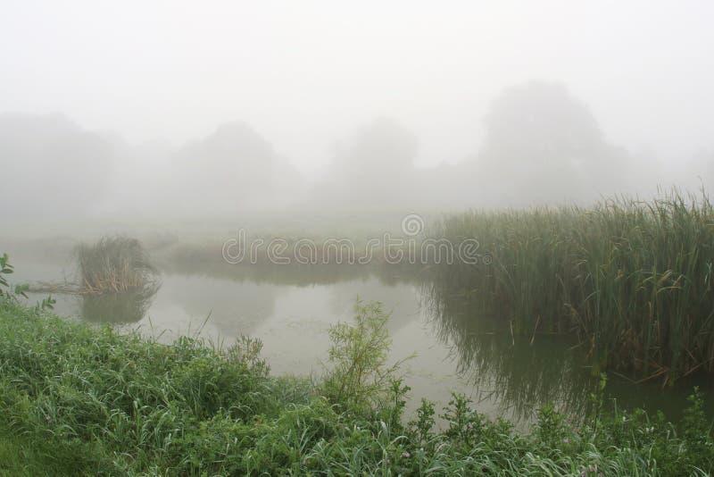 Туман утра лета стоковое изображение rf