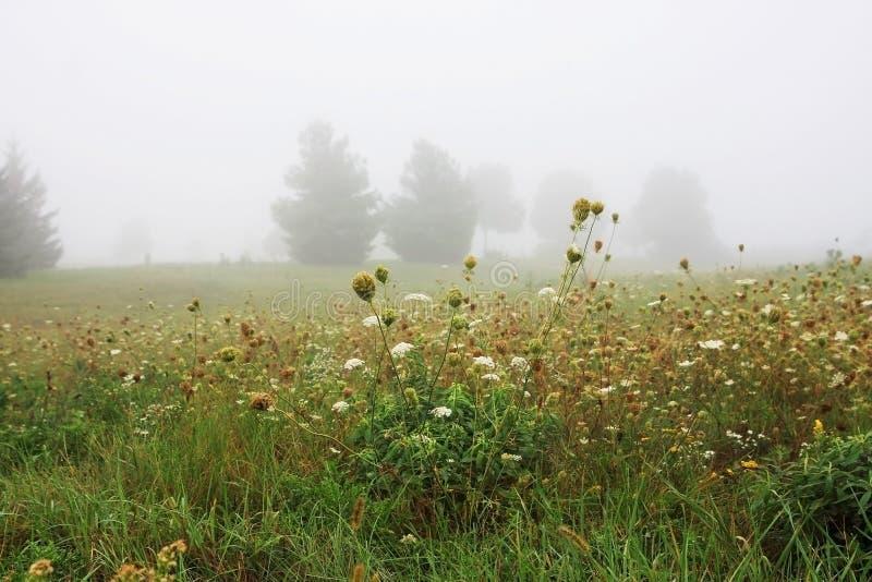 Туман утра осени над полем стоковые фото