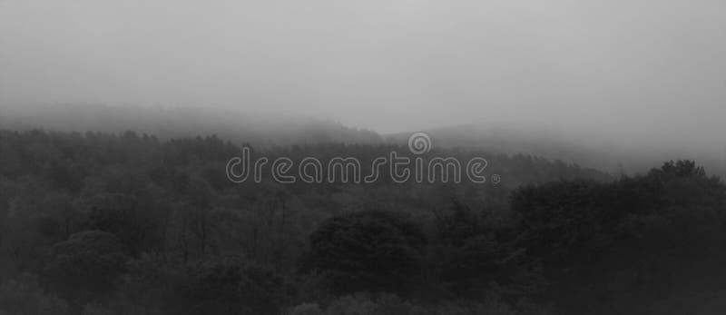 Туман утра осени стоковое изображение rf