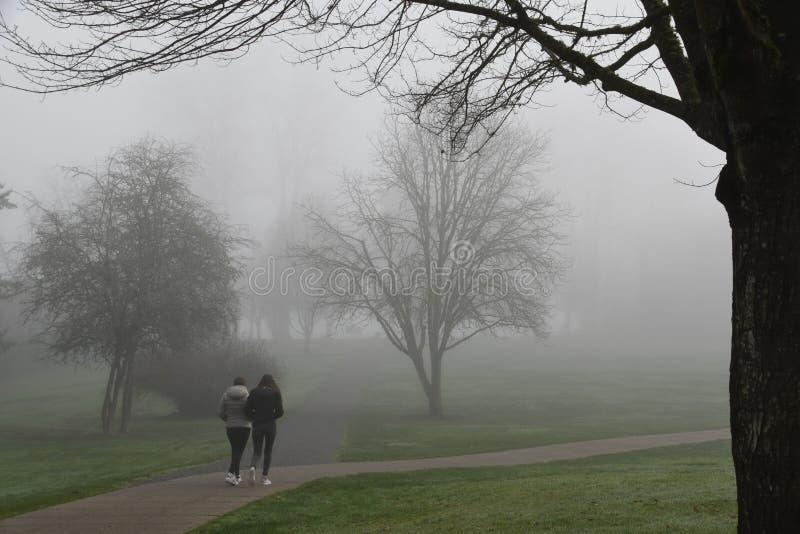 Туман утра через деревья в Redmond, парке WA стоковое изображение rf