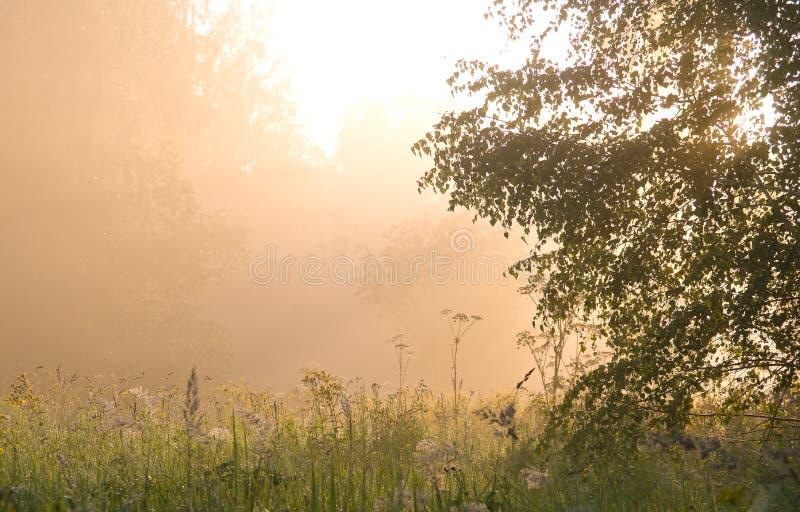 Туман утра стоковые изображения rf