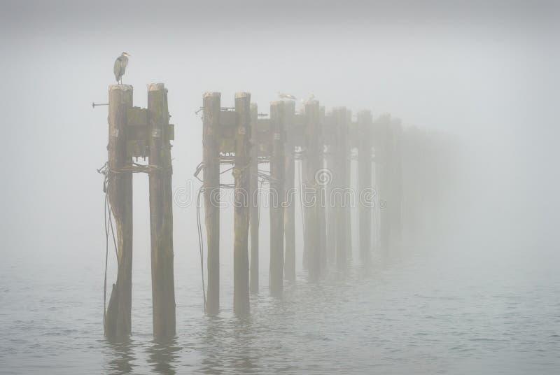 Туман, штабелевки и цапля стоковая фотография