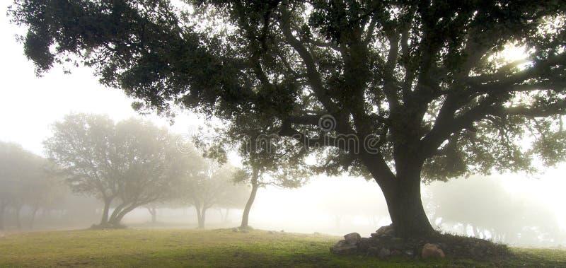 туман стоковое фото rf