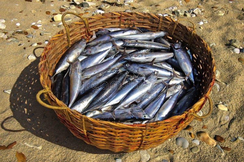 туна корзины свежая стоковая фотография rf