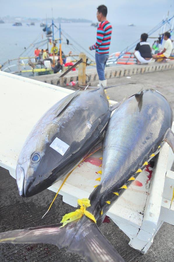 Тунец приземляется на тележку на морском порте стоковое фото rf