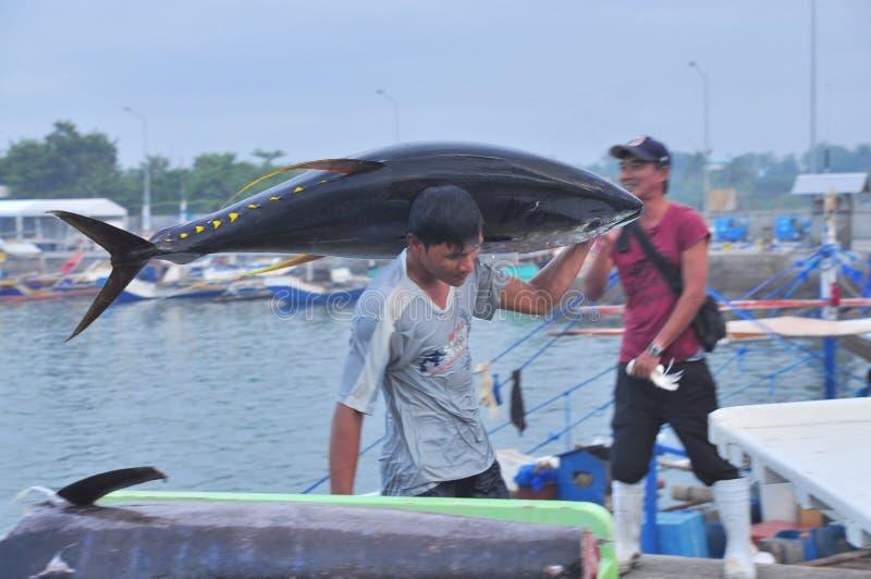 Тунец приземляется на тележку на морском порте стоковая фотография rf