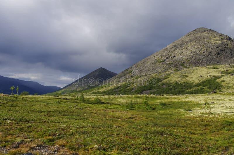 Тундра горы при мхи и утесы покрытые с лишайниками, Hibi стоковое фото