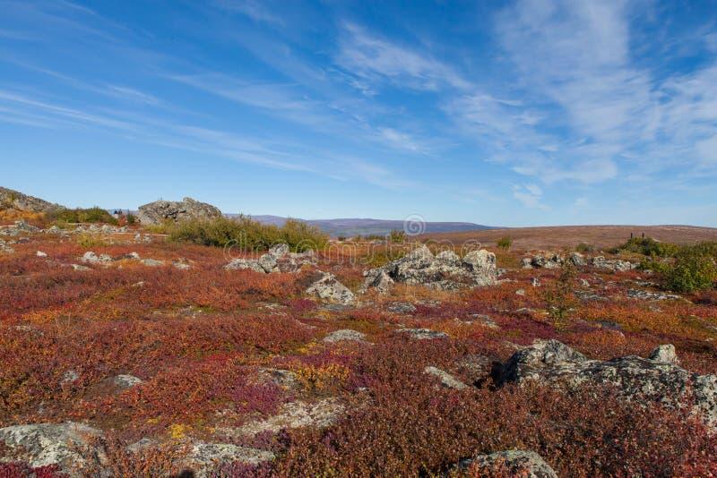 Тундра Юкона ледовитая в цветах падения стоковые фотографии rf