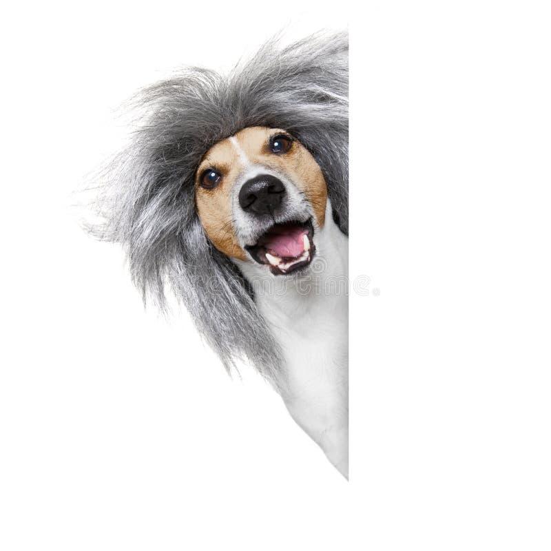 Тупая придурковатая шальная собака стоковое фото rf