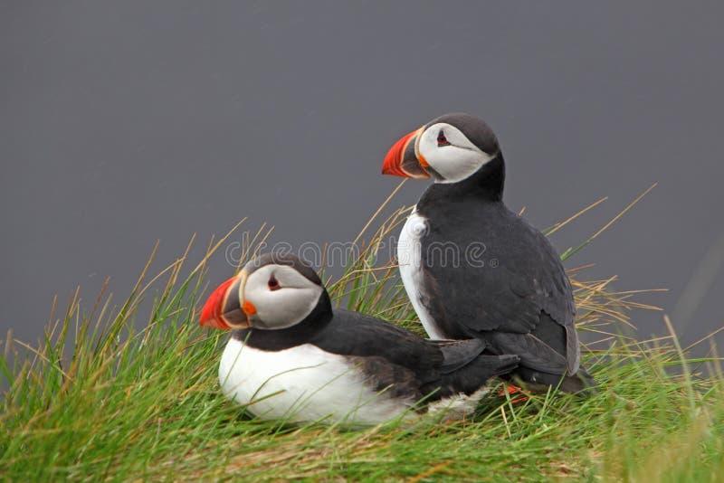 Тупик птицы стоковое фото
