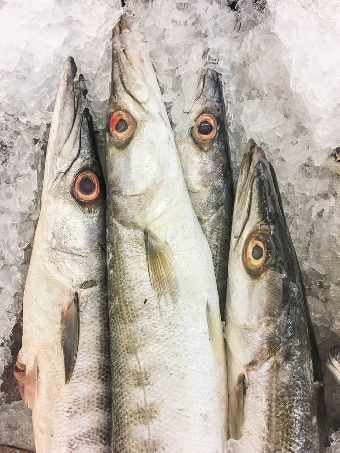 Тупоконечные рыбы барракуды стоковая фотография rf