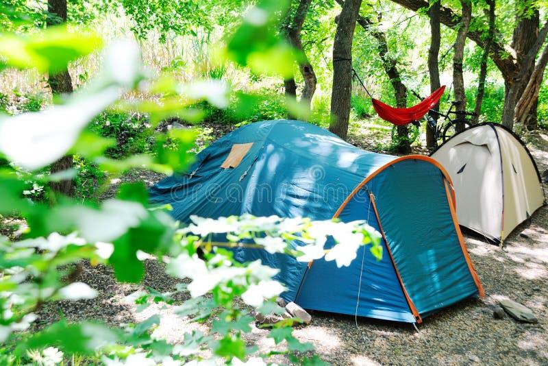 2 туристских шатра в тенистом лесе на предпосылке гамака и велосипеда Кемпинг стоковое изображение rf