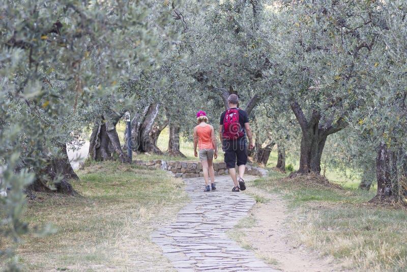 Туристы в саде оливок стоковая фотография rf