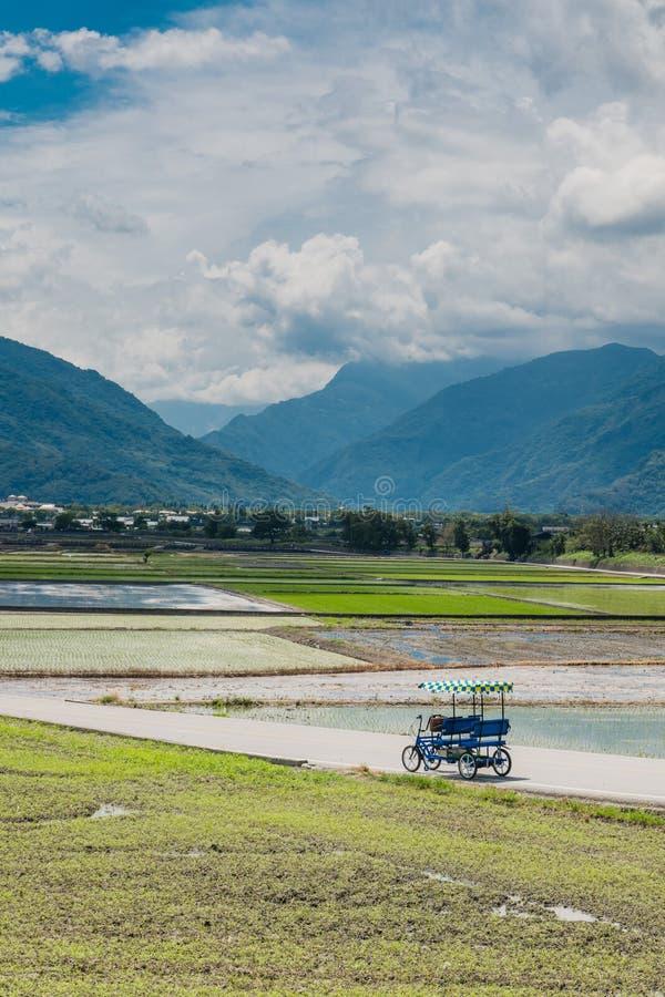 Туристы едут электрические трициклы на дорогах поля Взгляд ландшафта красивых полей риса на бульваре Брауна, Chishang, стоковые фотографии rf